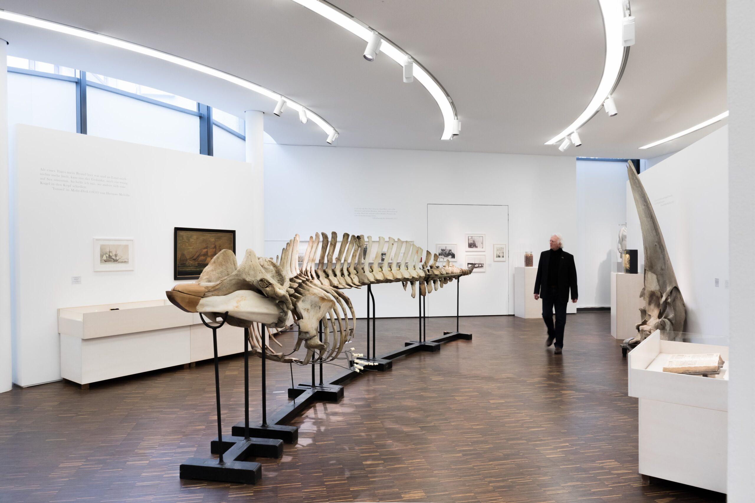 Museum La8 Hohesee Walskelett Besucher F Jesse Kl