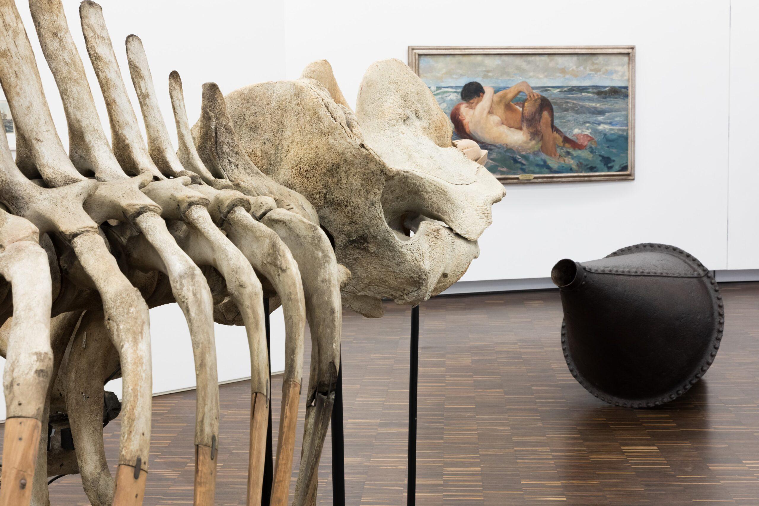 Museum La8 Hohesee Walskelett Boje F Jesse Kl